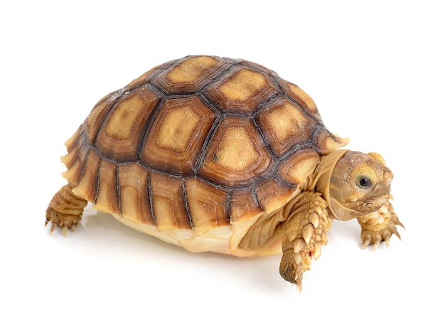 Turtle on white space