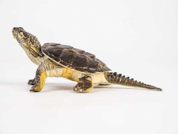 Turtle on white