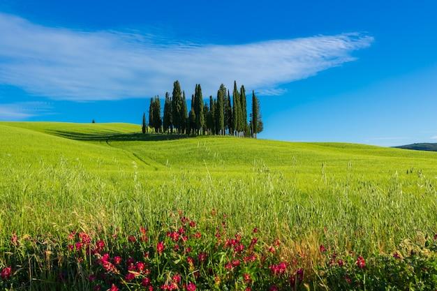 トスカーナのなだらかな丘とヒノキの木の風景