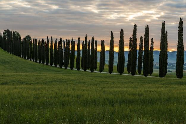日の出の道に沿ってヒノキとトスカーナイタリアの風景