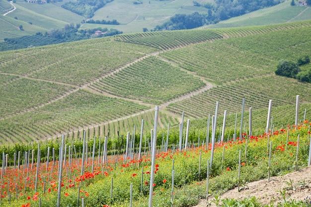 투스카니. 이탈리아에서 가장 유명한 와인 산지의 한가운데에 있는 포도원.