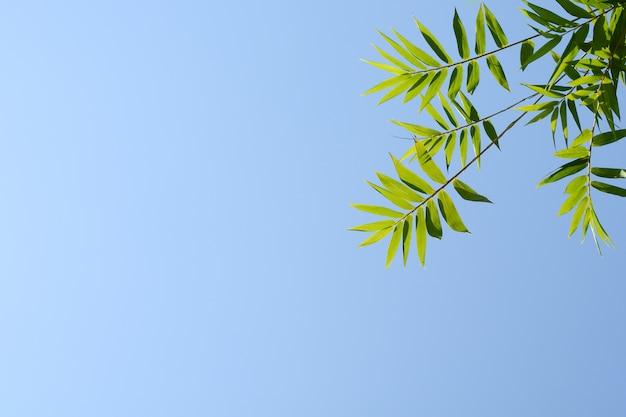 Twig and bamboo leaf on blue sky