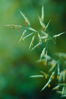 Twig of grass on green blurred background