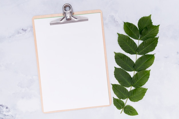 Twig leaves with mock-up clipboard