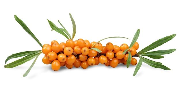 Веточка свежих спелых ягод облепихи, изолированные на белом
