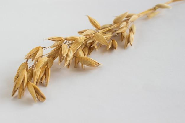 白い背景の上の麦の小枝。横に