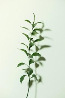 白で隔離される緑の葉を持つ小枝