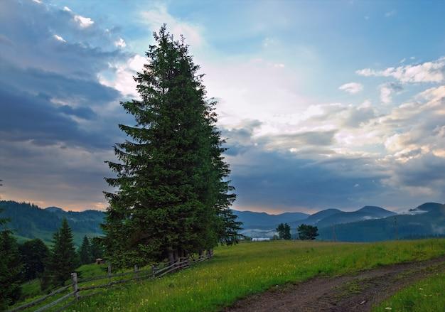 高いモミの木と嵐の雲と夕暮れの夏の山の開花緑の牧草地