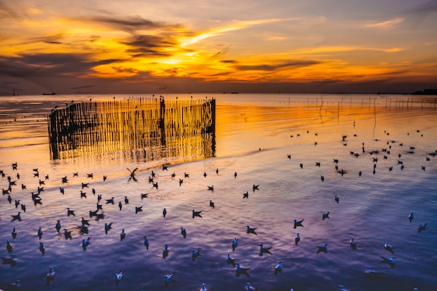 Twilight sunset with sea and seagulls at bang pu, thailand