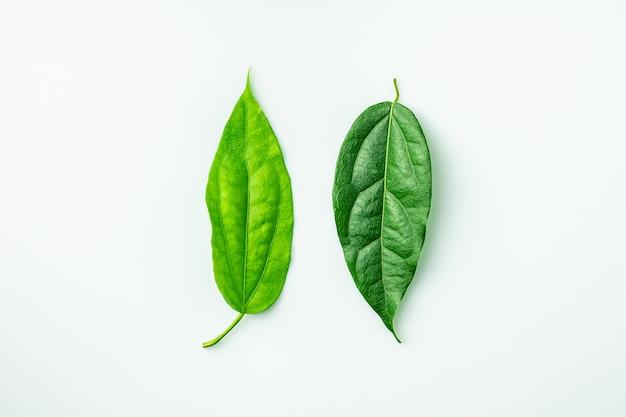 Зеленые листья близнецов на белом фоне.