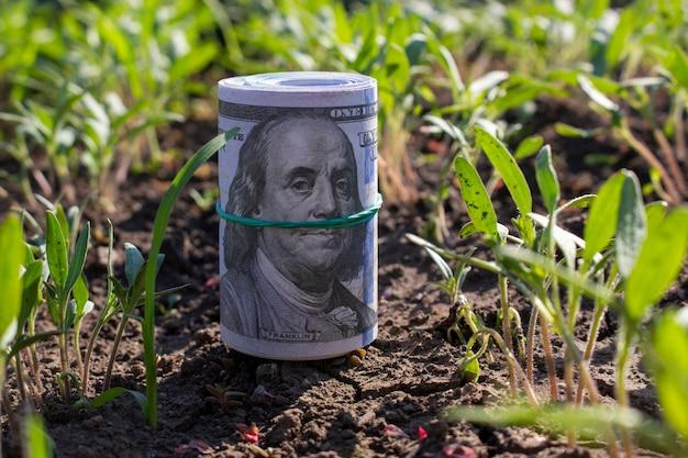 トマトの苗の近くの肥沃な土壌で百ドル札をねじった。ビジネスコンセプト。
