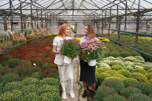 Two adorable ladies posing with a bunches of pink chrysanthemums in a beautiful blooming green house with glass roof.