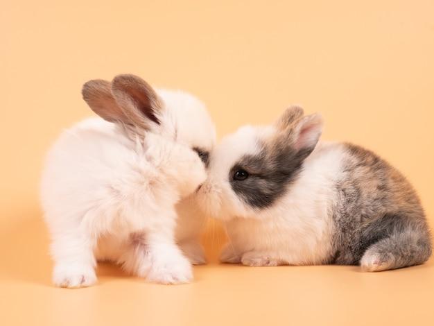 黄色の背景に座っている2匹の愛らしい白いウサギ。一緒に座っている2匹の素敵なウサギ