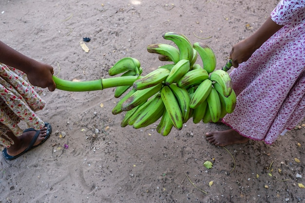Two african young girls carry a bunch of green bananas on the street of zanzibar island, tanzania, east africa