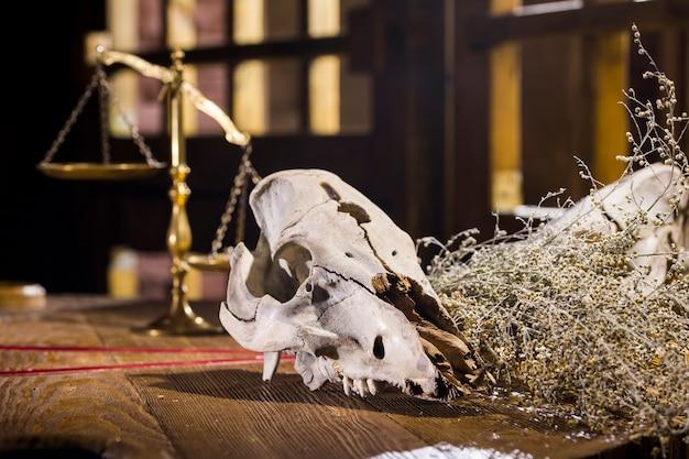 Два черепа животных на столе