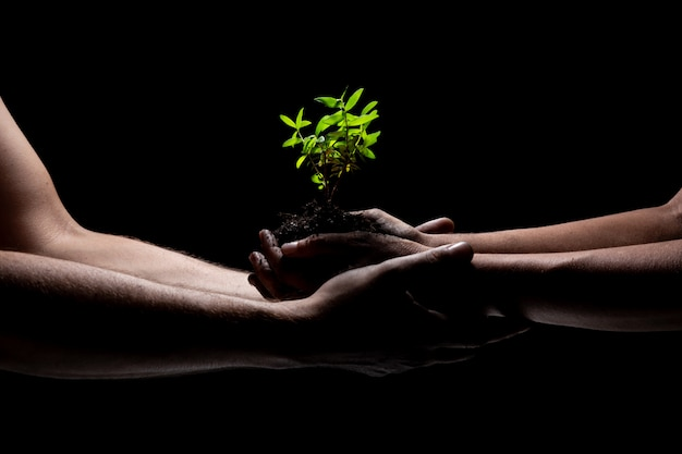 Two arms holding a young green plant growing. black background