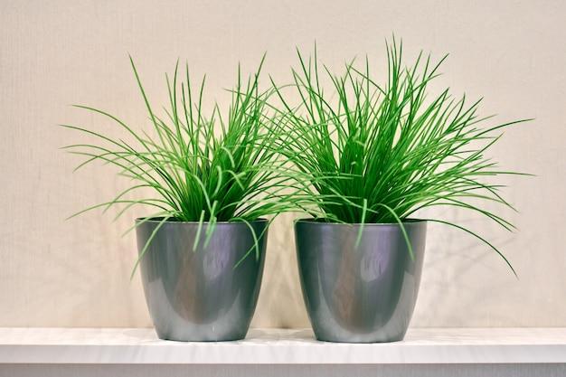 선반에 두 개의 인공 녹색 식물 냄비입니다. 집에 플라스틱 장식 식물