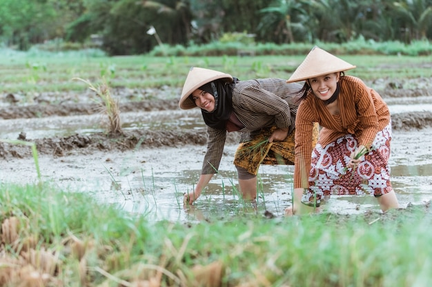 Two asian female farmer smiles while bending down to plant rice plants with a rice field