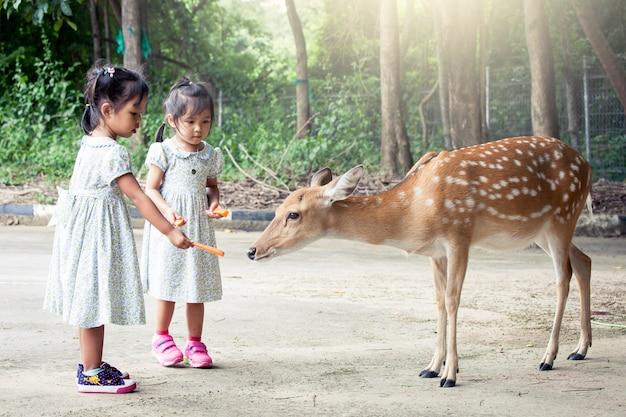 動物園で鹿を食べる2人のアジアの少女