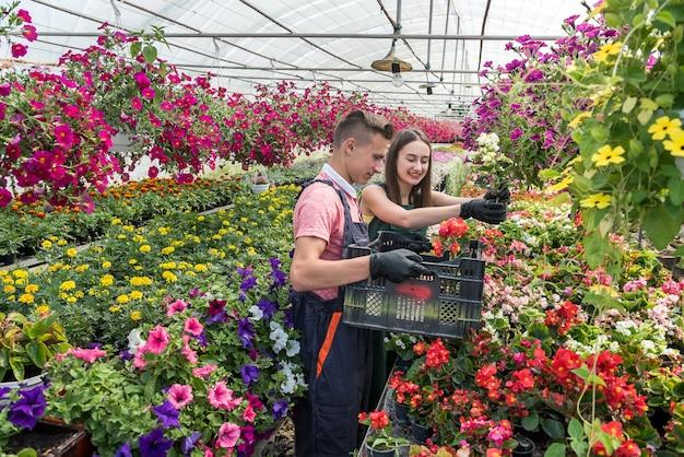温室で販売する花の植物を育てるために一緒に働いている2人の魅力的な若い庭師