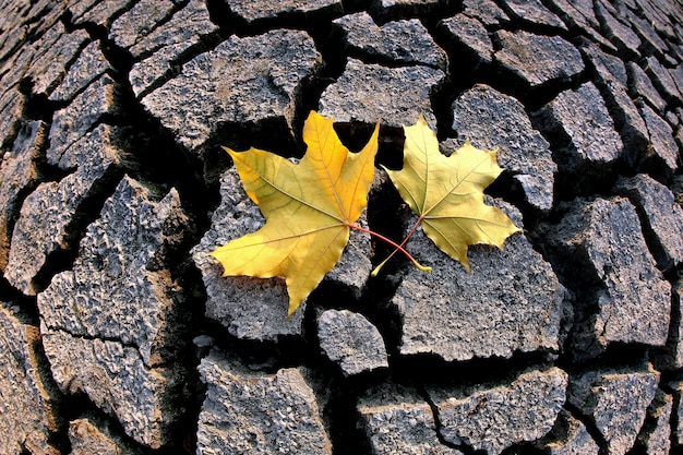 Two autumn leaves lie on the dry