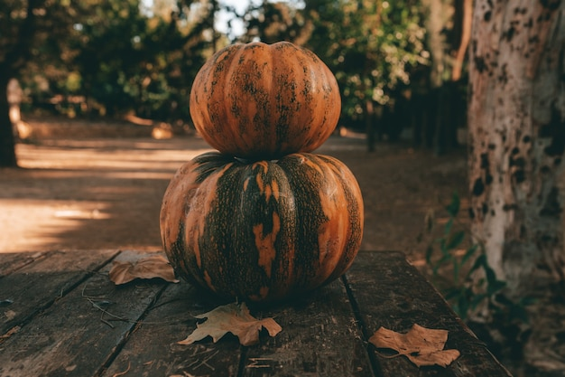 The two autumn pumpkins stacked on a wooden table in a forest