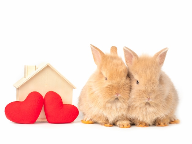 Two baby red-brown rabbits with red heart and toy house on white.