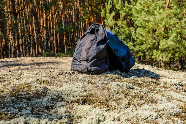 Two backpacks on a ground in a coniferous forest