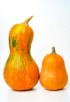 Two beautiful bright orange pumpkins stand side by side on a white background isolate