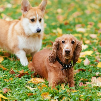 Две красивые собаки резвятся на улице осенью