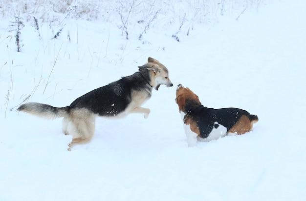 2匹の美しい犬