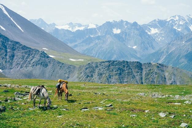 두 마리의 아름다운 말이 큰 눈 덮인 산들 사이의 녹색 고산 초원에 방목하고 있습니다.