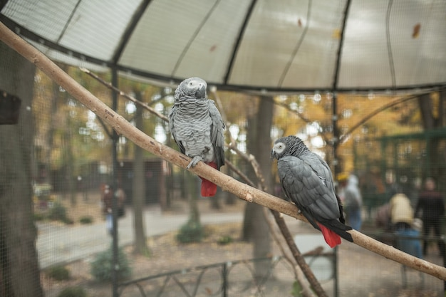 Two beautiful  parrot in a zoo