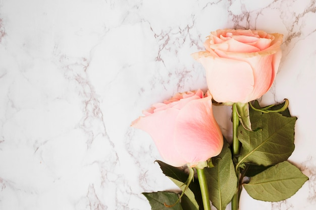Two beautiful pink roses against marble textured backdrop