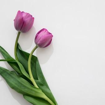 2つの美しい紫のバラ