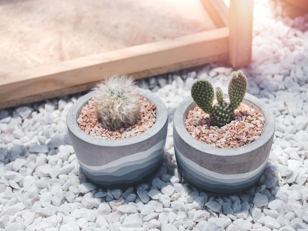 Two beautiful round concrete pots with cactus plant on white gravels