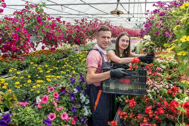 2人の美しい若い男性と女性が温室で働き、色とりどりの花の成長について話します