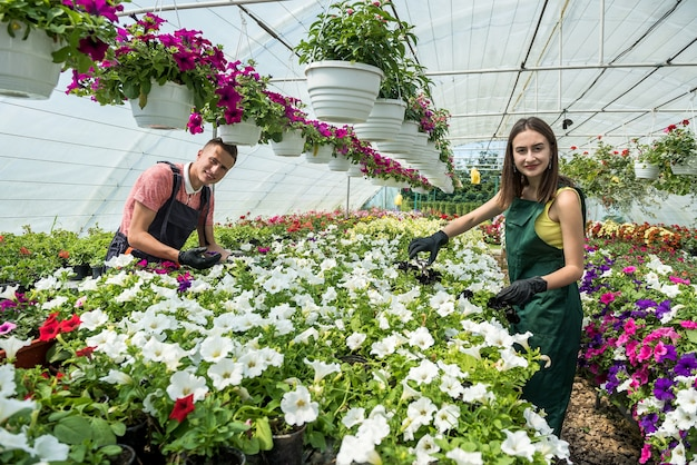 Two beautiful young man and woman work in a greenhouse and talk about growing of colorful flowers botany