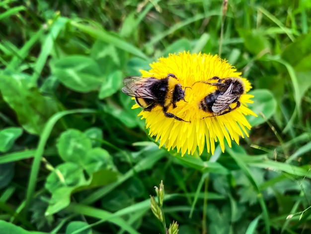 꽃에 두 꿀벌