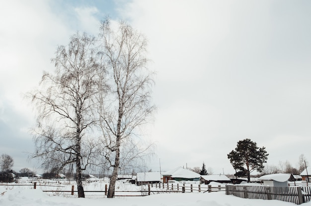 Two birch trees are growing in the village.