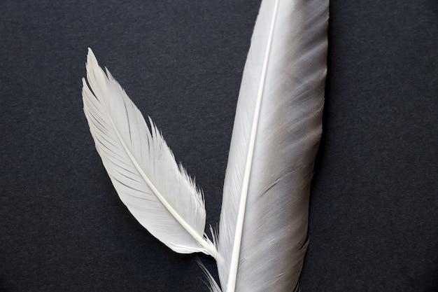 검은 배경에 고립 된 두 개의 새 날개 깃털