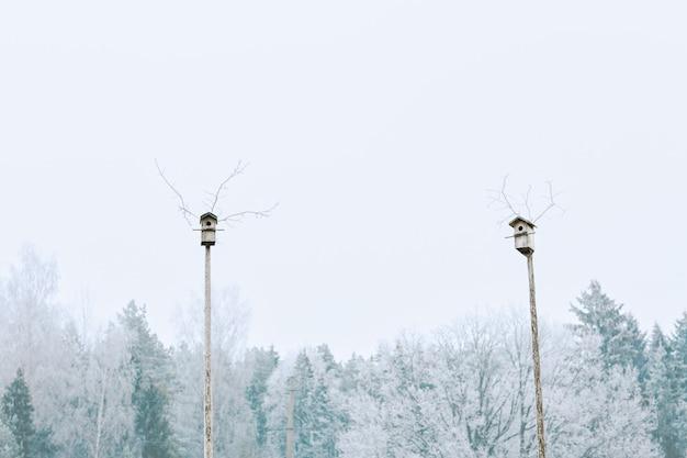 Два скворечника на длинных шестах в морозный морозный день
