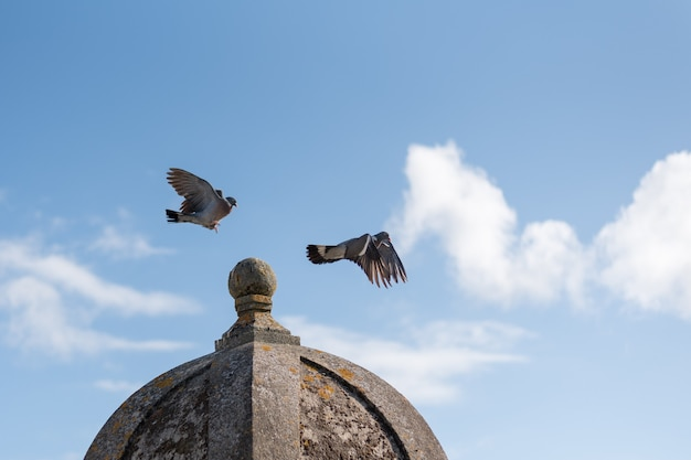 Two birds flying over stone roof against blue sky with clouds