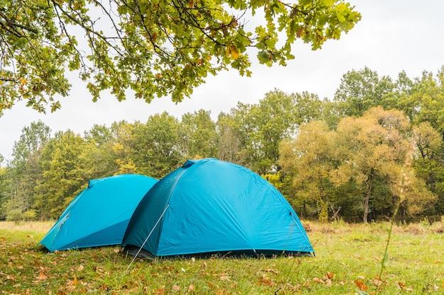 Две синие палатки под деревом на территории кемпинга в лесу