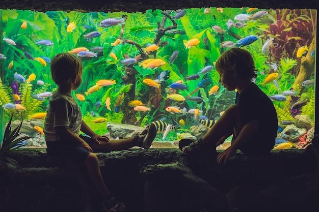 二人の少年が水族館の魚を見ています。