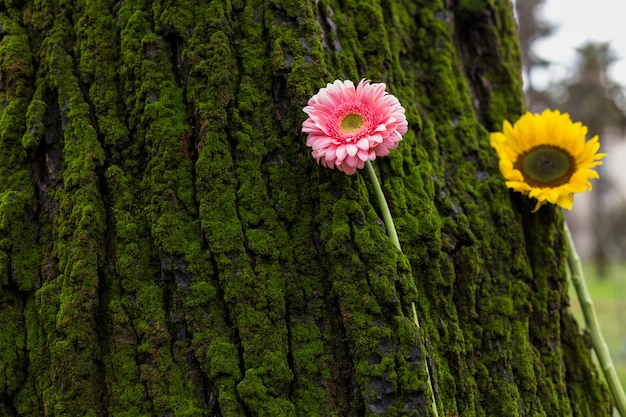 Two bright flowers on tree bark