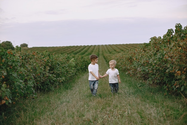Two brothers playing in a summer field