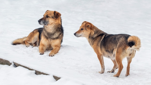 Две коричневые собаки зимой в снегу
