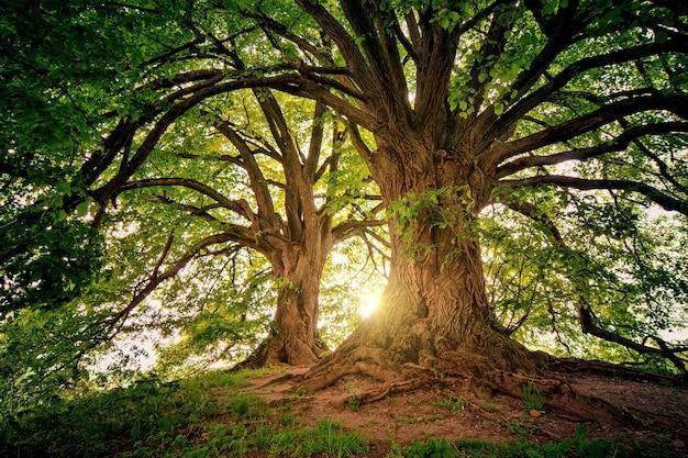 2本の茶色の木