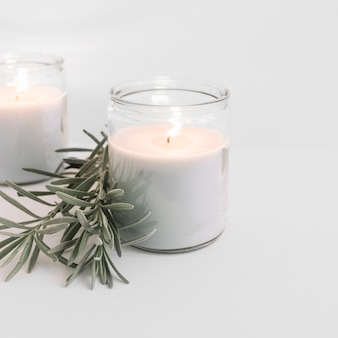 Two burning candles in glass candlesticks with plant